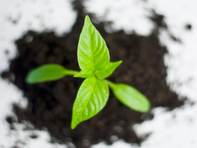 plant-paprika-pepper-grow-82728